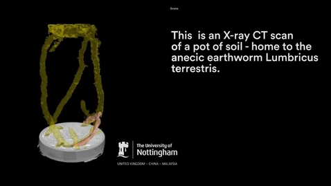 Thumbnail for entry CT scans reveal underground world of the earth worm