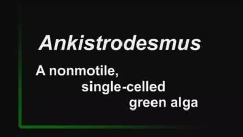 Thumbnail for entry Ankistrodesmus