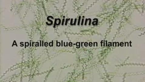 Thumbnail for entry Spirulina