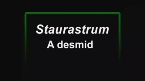 Thumbnail for entry Staurastrum