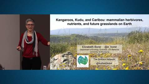 Thumbnail for entry Ecology Seminar Series – Dr. Elizabeth Borer – Kangaroos, Kudu, and Caribou: mammalian herbivores, nutrients, and future grasslands on Earth