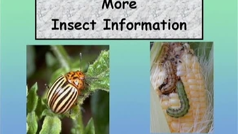 Thumbnail for entry 1.1_003_FV_More Insect Information