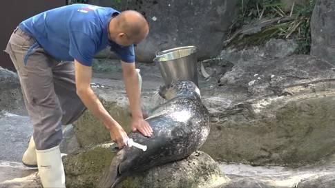 Fitte Seehunde im Zürcher Zoo