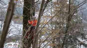 Holzschlag aus der Luft: Helikopter fliegt rund 140 gefällte Bäume aus dem Entlebuch