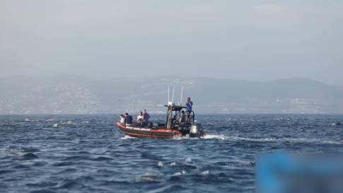 Feel-Good-Video: Delfinschwarm überrascht Walbeobachter in Kalifornien