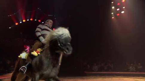 Humor und Nervenkitzel: 100 Jahre Circus Knie