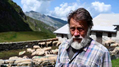 """""""So einen Sommer habe ich noch nie erlebt"""": Viermal hat der Wolf bei Willi Illien auf der Alp Tomül Schafe gerissen"""