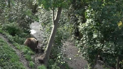 Der Bärenpark Bern soll ausgebaut werden