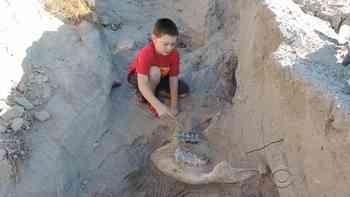 9-Jähriger stolpert beim Versteckis-Spielen und findet Millionen Jahre altes Fossil