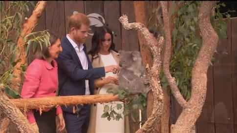 Harry und Meghan besuchen süsse Koalas