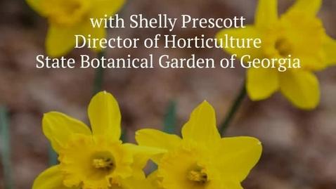Thumbnail for entry Botanical Garden: Caring for Spring Bulbs