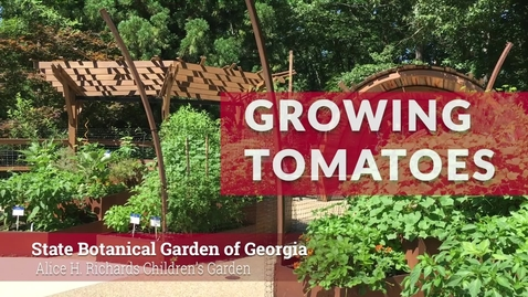 Thumbnail for entry State Botanical Garden of Georgia: Growing Tomatoes