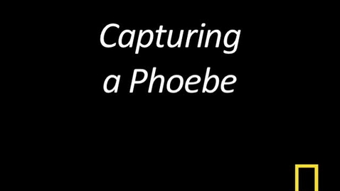 Thumbnail for entry Kitty Cams: Capturing a Phoebe