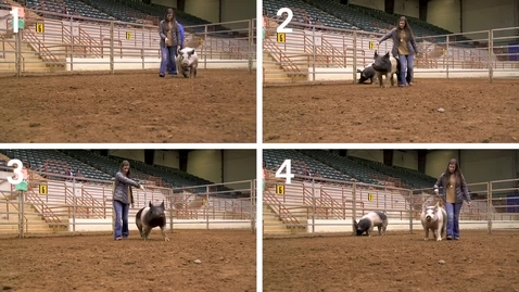 Thumbnail for entry Class 6- All Entries - Commercial Gilts - Quad View No Audio