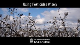 Thumbnail for entry Innovative UGA Extension Research - Using Pesticides Wisely