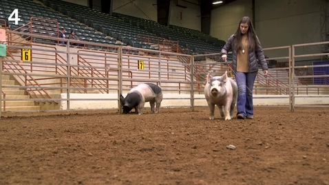 Thumbnail for entry Class 6 - Entry 4 Commercial Gilts