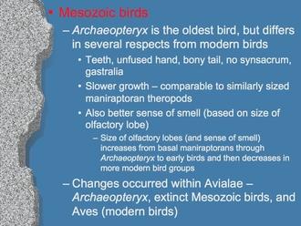 Evolution of birds. Ppt video online download.