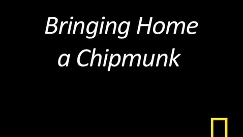 Thumbnail for entry Kitty Cams: Bringing Home a Chipmunk