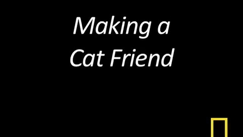 Thumbnail for entry Kitty Cams: Making a Cat Friend