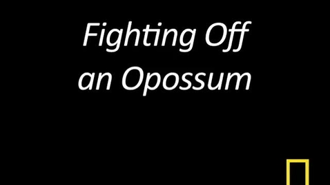 Thumbnail for entry Kitty Cams: Fighting Off an Opossum