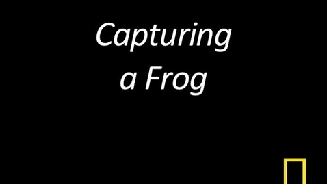 Thumbnail for entry Kitty Cams: Capturing a Frog