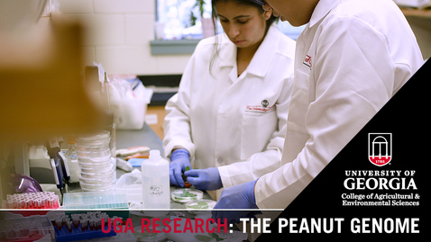 Thumbnail for entry The Peanut Genome | Scott Jackson