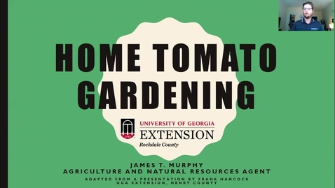 Thumbnail for entry Tomato Home Gardening