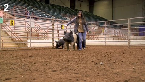Thumbnail for entry Class 6 - Entry 2 Commercial Gilts