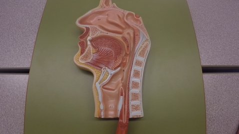 Thumbnail for entry Digestive System Overview