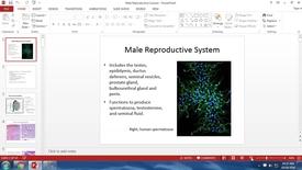 Thumbnail for entry TH HS 10/18/16: Male Reproductive System