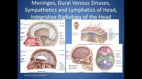 Thumbnail for entry BL, HS, Meninges, Venous Sinuses lymph and symp of H&N 11/28/16