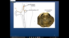 Thumbnail for entry Evv-N&B-Pain - 2017 Apr 17 10:46:24