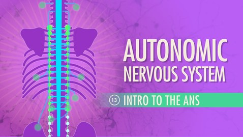 Thumbnail for entry Autonomic Nervous System: Crash Course A&P #13