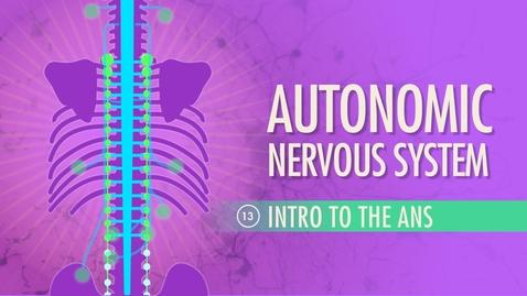 Thumbnail for entry Autonomic Nervous System: Crash Course A&P #13