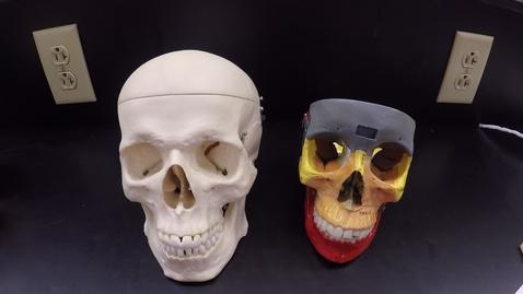 Thumbnail for entry Axial Skeleton 1