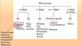 Thumbnail for entry EVV, HD, 3/6/17 - 2.25a pos RNA viruses