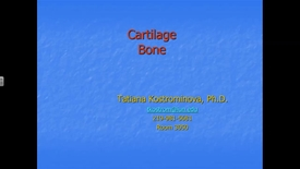 Thumbnail for entry Cartilage Bone - 2016 Sep 01 09:40:14