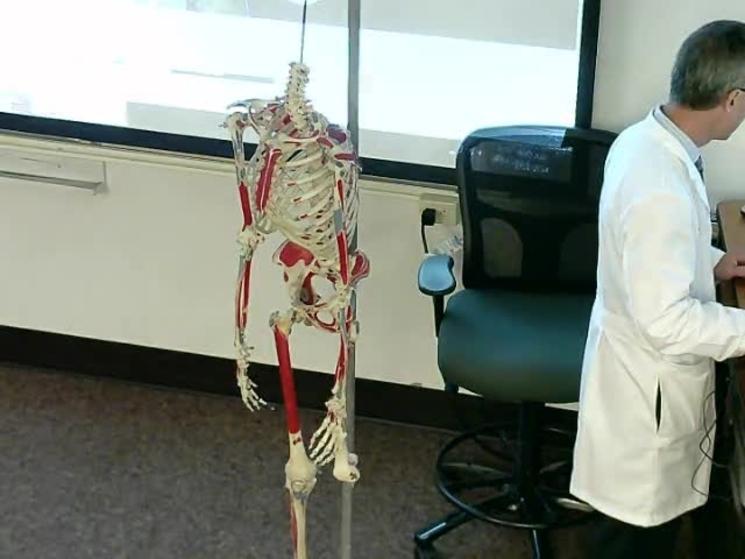 Anatomy Lecture 1 Indiana University