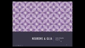 Thumbnail for entry EvvMCTNeurons&Glia - 2016 Sep 06 10:35:48