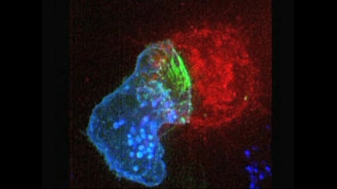 Thumbnail for entry 9-6_Immunological_Synapse (Source)