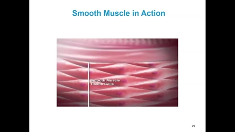 Thumbnail for entry WL - FHD - 170125 - Gardner - Smooth Muscle in Action