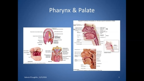 Thumbnail for entry Bl, HS, Pharynx and Palate, 12/5/16
