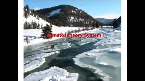 Thumbnail for entry WL - NB - 170417 - Walker - Somatosensory systems 1