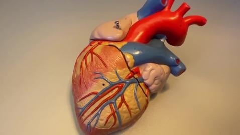 Thumbnail for entry Heart - Coronary Circulation