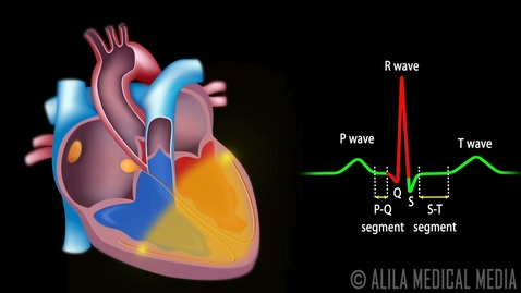 Thumbnail for entry Cardiac Conduction System and Understanding ECG, Animation.