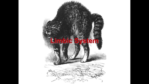 Thumbnail for entry WL - NB - 170501 - Walker - Limbic system - hippocampus memory and learning amnesias - amygdala - emotions