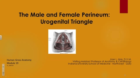Thumbnail for entry NW HS 10/17/2016: The Male and Female Perineum: Urogenital Triangle