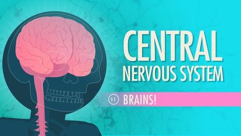 Thumbnail for entry Central Nervous System: Crash Course A&P #11
