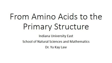 Thumbnail for entry From Amino Acids to the Primary Structure