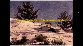 Thumbnail for entry WL - NB - 170410 - Walker - Intro to Nervous System